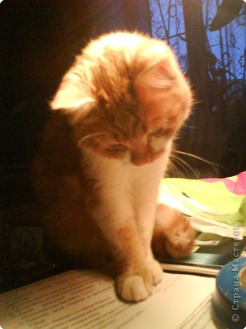 Айрис фолдинг, Мозаика: Посвящаю памяти моего любимого кота Кеши фото 2