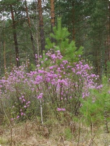 Я родилась в Горном Алтае. Здесь очень красивая природа. Любуясь другими фоторепортажами, решила показать вам свою Родину. Её часто называют Голубой Алтай, так как горы в далеке имеют синие оттенки. фото 13