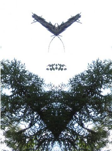 если отобразить часть фото симметрично, получаются интересные картинки фото 3