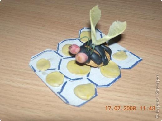 Пчёлка из абрикосовой косточки.