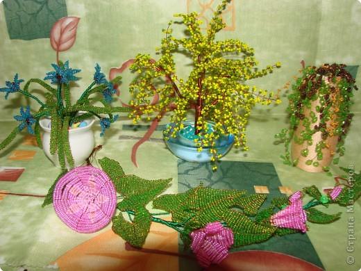 Бисероплетение: Цветы из бисера.