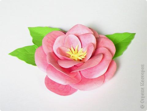 Бумагопластика, Моделирование: Бумагопластика. Мастер класс как сделать розу. фото 14