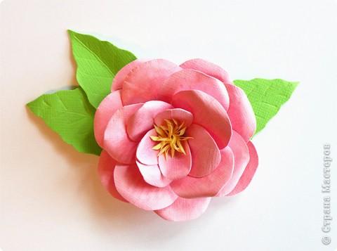 Бумагопластика, Моделирование: Бумагопластика. Мастер класс как сделать розу. фото 2