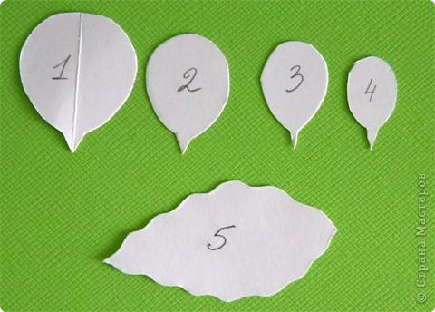 Бумагопластика, Моделирование: Бумагопластика. Мастер класс как сделать розу. фото 3