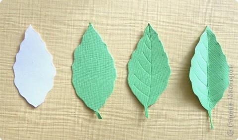 Бумагопластика, Моделирование: Бумагопластика. Мастер класс как сделать розу. фото 13