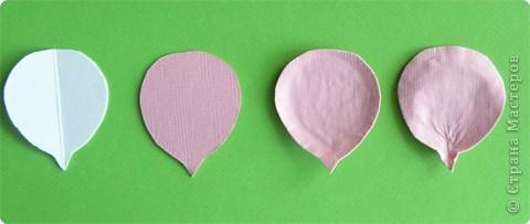 Бумагопластика, Моделирование: Бумагопластика. Мастер класс как сделать розу. фото 8