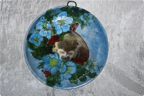 На фото мой обезьян Антошка фото 1