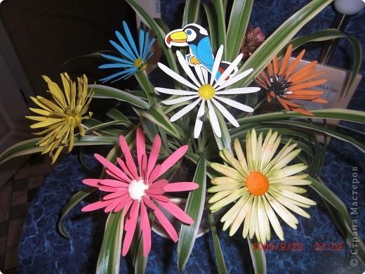 Не определена: У меня расцвел цветок ! фото 1