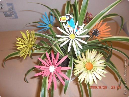 Не определена: У меня расцвел цветок ! фото 2