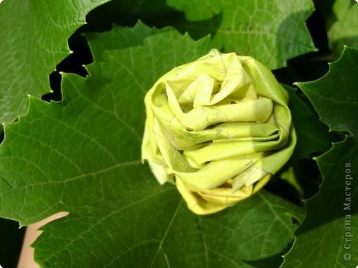 Эта роза из кленовых листьев фото 2