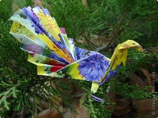 Оригами: Павлинчик фото 1