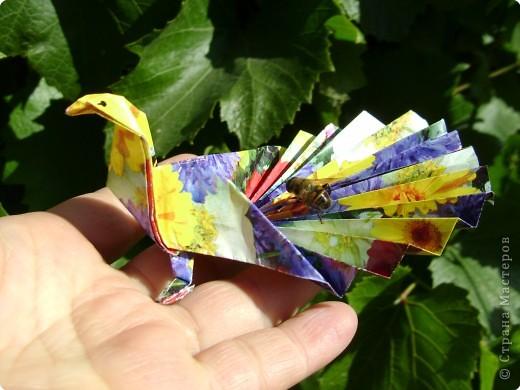 Оригами: Павлинчик фото 2