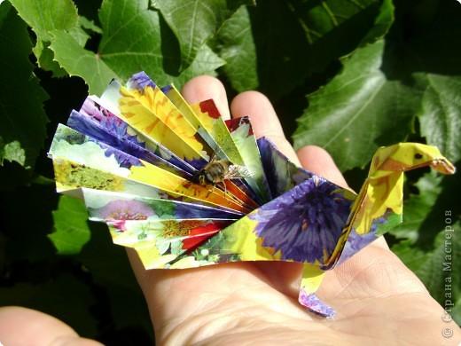 Оригами: Павлинчик фото 3