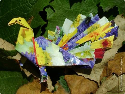 Оригами: Павлинчик фото 5