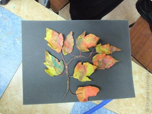 Осенняя веточка фото 1