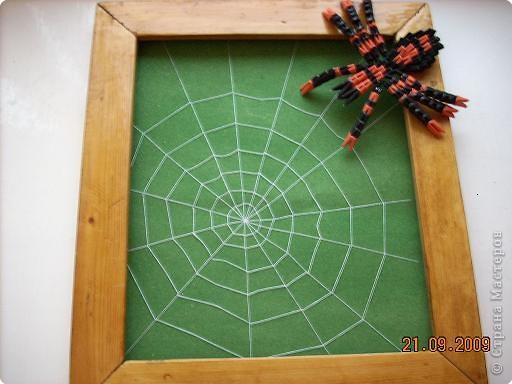 Паук-паучище давно хотел раскинуть свои сети и вот дождался, наконец...  фото 3