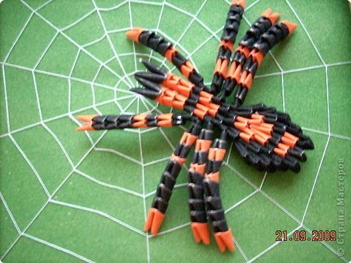Паук-паучище давно хотел раскинуть свои сети и вот дождался, наконец...  фото 5