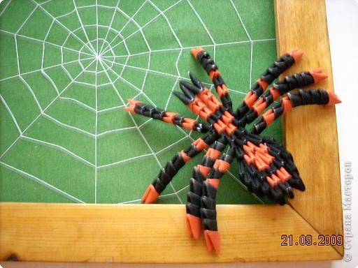 Паук-паучище давно хотел раскинуть свои сети и вот дождался, наконец...  фото 4