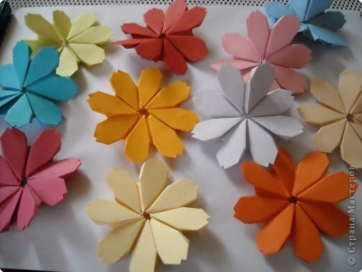 МК.Разноцветные космеи. фото 16