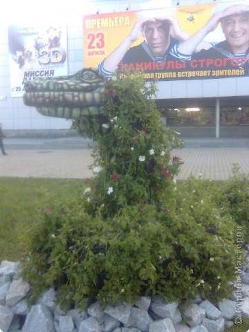 Царевна Лягушка. фото 2