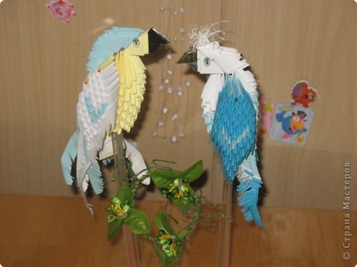 Оригами модульное: попугайчики  фото 2