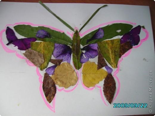Волшебные крылья фото 2