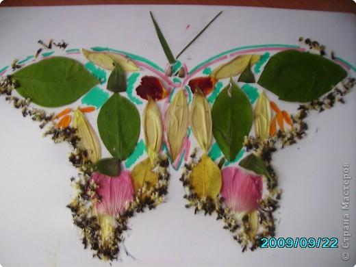 Волшебные крылья фото 7
