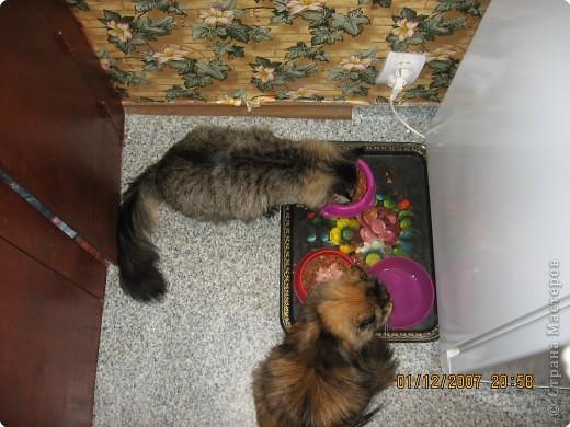 Две девицы под окном..... фото 2