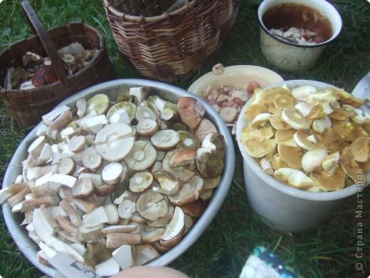 Вот какие грибы растут в нижегородской области! фото 2