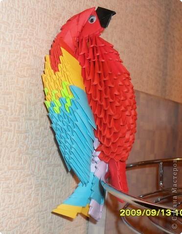 Попугай АРА Бумага фото 1