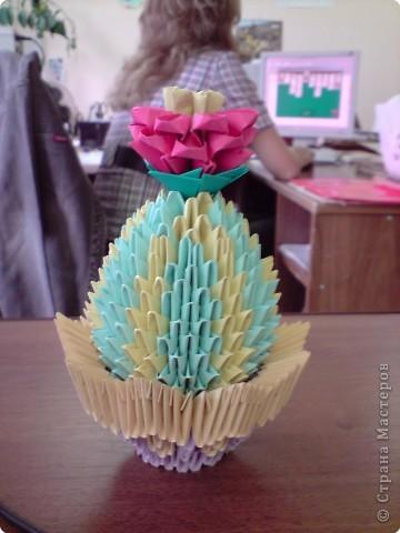 Полосатый кактус