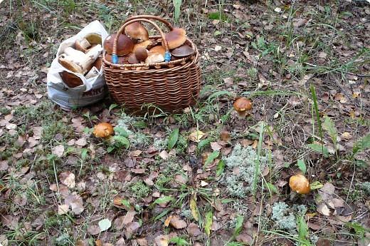 Привезли из Фролищ кучу грибов.Хотя дождей нет давно, на термометре  +24, вода в озере тёплая. фото 1