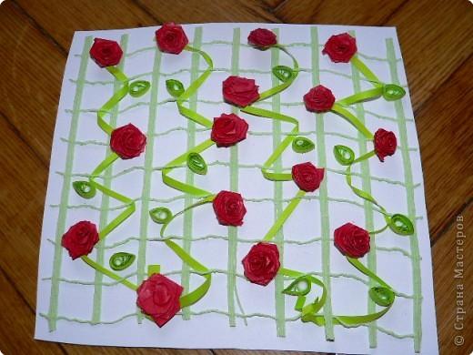 Плетистая роза!) фото 2