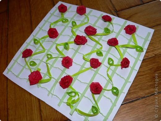 Плетистая роза!) фото 1