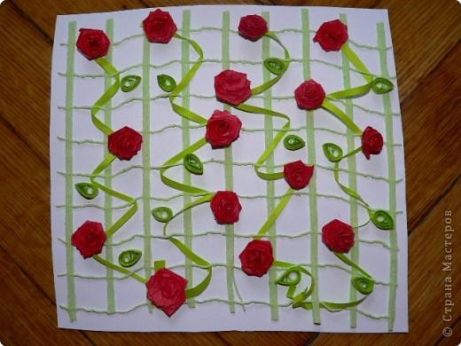 Плетистая роза!) фото 4