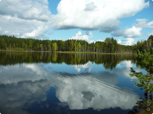 Привезли из Фролищ кучу грибов.Хотя дождей нет давно, на термометре  +24, вода в озере тёплая. фото 5