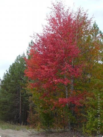 Буйство красок! Во Фролищах царствует Осень. фото 3