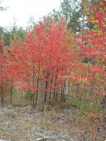 Буйство красок! Во Фролищах царствует Осень. фото 5
