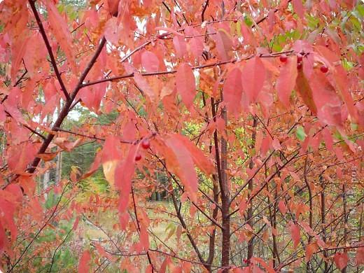 Буйство красок! Во Фролищах царствует Осень. фото 1