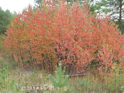 Буйство красок! Во Фролищах царствует Осень. фото 4