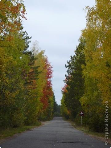 Буйство красок! Во Фролищах царствует Осень. фото 2