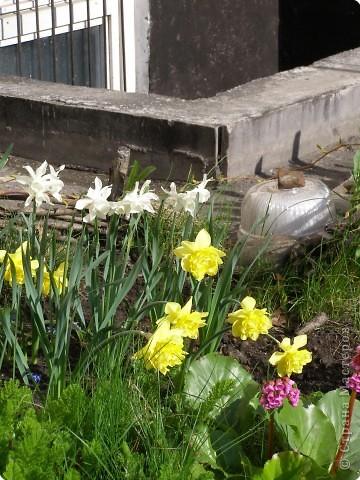 В городе весну можно и пропустить, если не было бы цветников и цветочников. Предлагаю вспомнить весну и возможно поучаствовать в озеленении своего города. фото 7
