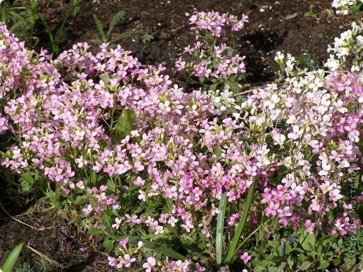 В городе весну можно и пропустить, если не было бы цветников и цветочников. Предлагаю вспомнить весну и возможно поучаствовать в озеленении своего города. фото 8