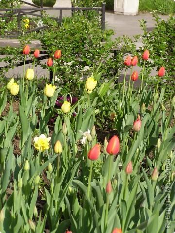В городе весну можно и пропустить, если не было бы цветников и цветочников. Предлагаю вспомнить весну и возможно поучаствовать в озеленении своего города. фото 10