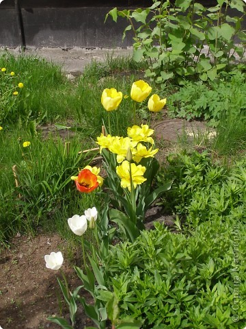 В городе весну можно и пропустить, если не было бы цветников и цветочников. Предлагаю вспомнить весну и возможно поучаствовать в озеленении своего города. фото 9