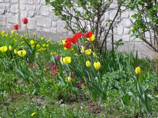 В городе весну можно и пропустить, если не было бы цветников и цветочников. Предлагаю вспомнить весну и возможно поучаствовать в озеленении своего города. фото 11