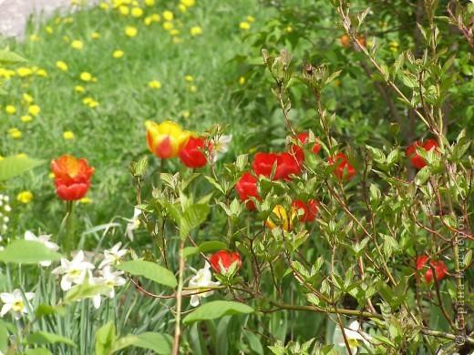 В городе весну можно и пропустить, если не было бы цветников и цветочников. Предлагаю вспомнить весну и возможно поучаствовать в озеленении своего города. фото 12