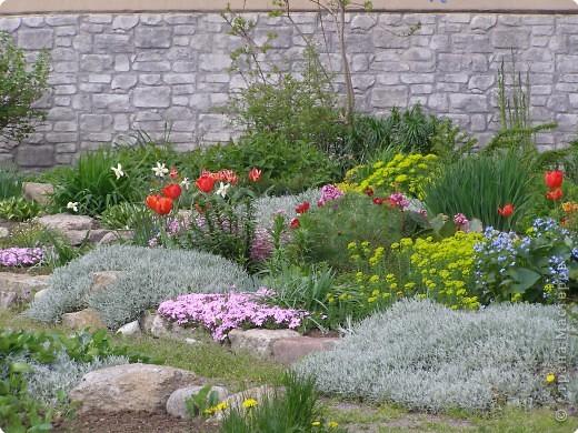 В городе весну можно и пропустить, если не было бы цветников и цветочников. Предлагаю вспомнить весну и возможно поучаствовать в озеленении своего города. фото 14