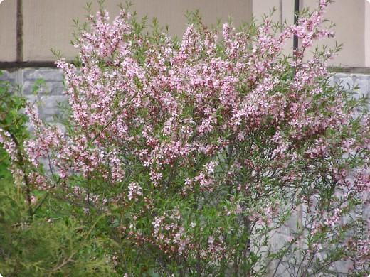 В городе весну можно и пропустить, если не было бы цветников и цветочников. Предлагаю вспомнить весну и возможно поучаствовать в озеленении своего города. фото 15