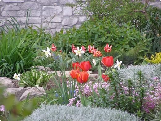 В городе весну можно и пропустить, если не было бы цветников и цветочников. Предлагаю вспомнить весну и возможно поучаствовать в озеленении своего города. фото 16